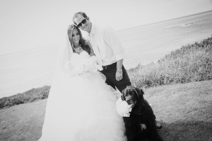 Beach Wedding, dog-Darcy Oliver Design