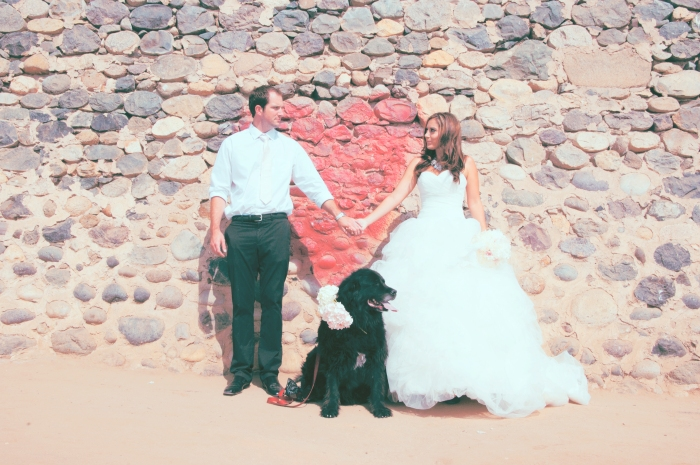 Wedding Photo, Newfoundland dog-Darcy Oliver Design