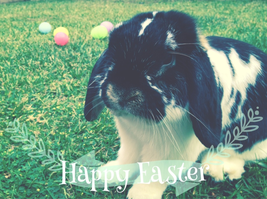 Happy Easter, holland lop, rabbit, easter bunny-Darcy Oliver Design